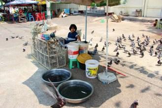 Vogelfutter Yangon