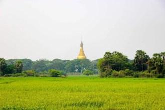 Reisfeld Mandalay