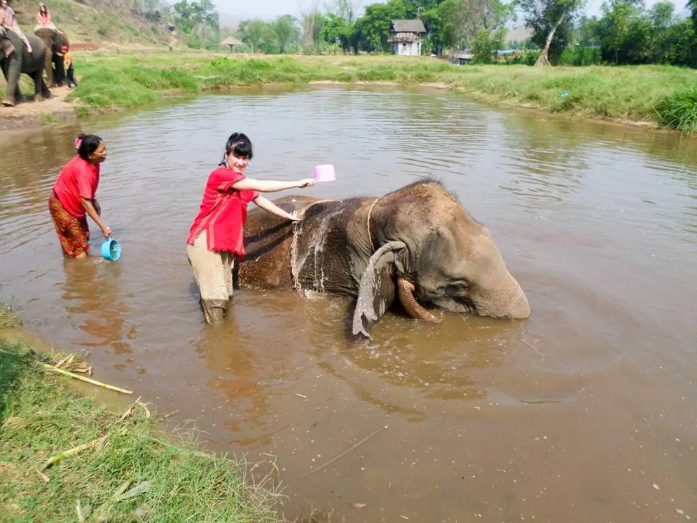 Elefanten baden in Chiang Mai