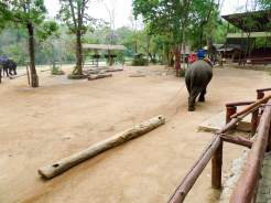 Tiershow im Thai Elephant Conservation Center