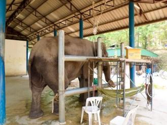 Tierklinik Thai Elephant Conservation Center