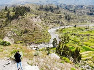 Colca-Tal mit den Terrassen und dem Colca Fluss