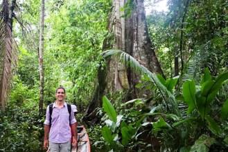Großer Baum Amazonas Peru