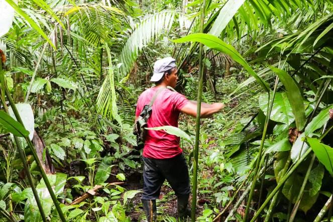 Unser Guide Alipio im Dschungel