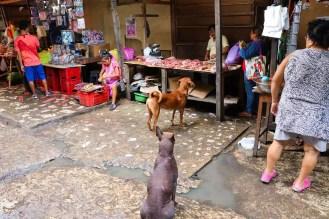 Hunde Belen Market
