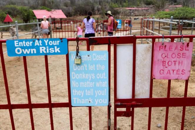 Donkey Sanctuary Bringamosa