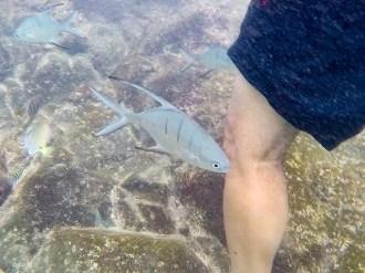 Kleiner Fisch Natural Pool