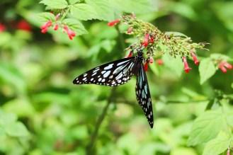 Schmetterlingsfarm Aruba