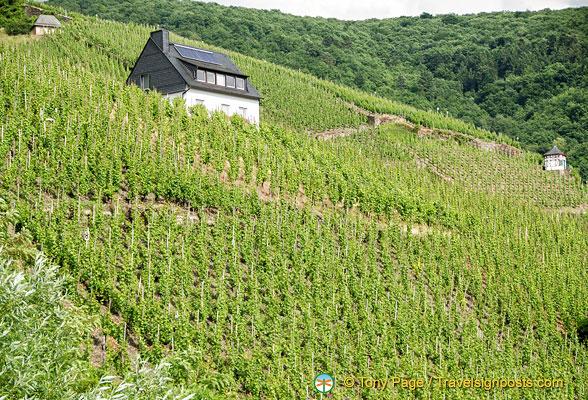 Bernkastel vineyards