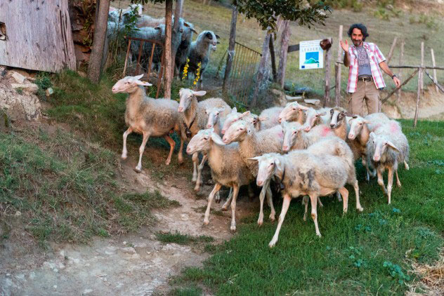 Silvio summons his sheep with a whistle
