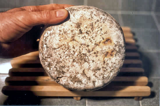 Mature tuma cheese, five months old