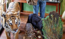 Deyrolle – A Unique Taxidermy Shop in the Heart of Paris