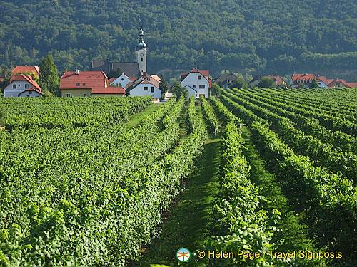 Wachau vineyards