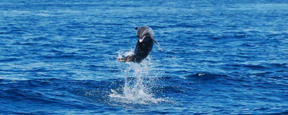 dolphin and whale st lucia tours TravelSmart