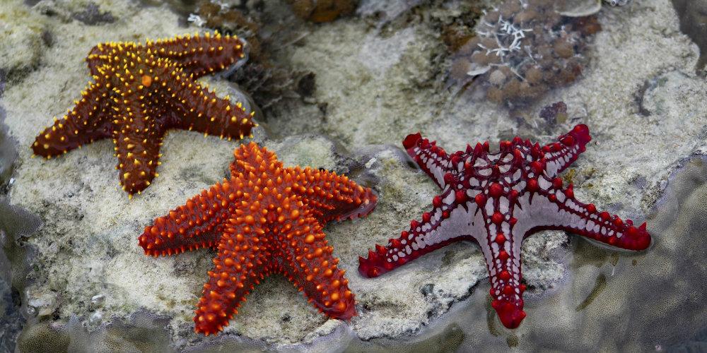 Saona Island Starfish Ocean TravelSmart VIP