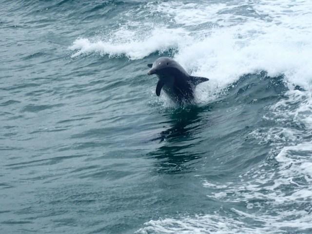 Penguin Island, Perth