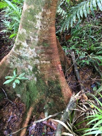 Daintree Rainforest facts