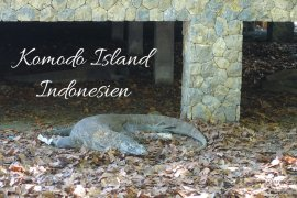 Komodo Island Indonesien Komodowarane