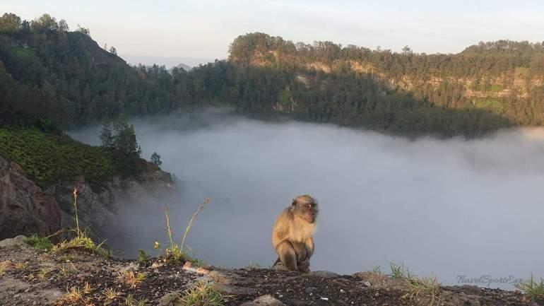 Besteigung Vulkan Kelimutu Flores Indonesien Affen