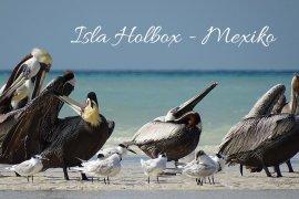 Isla Holbox Titel