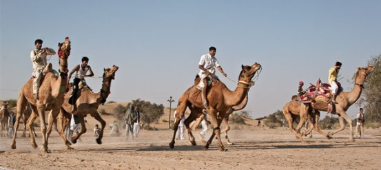 International Camel Derby Festival