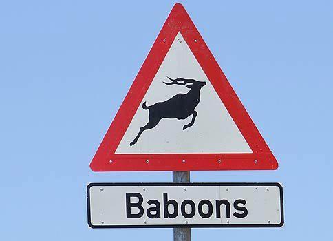 Baboons Kudu