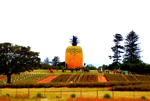 Big Pineapple Bathurst