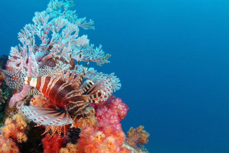 3 scuba diving 2 seychelles tourism board