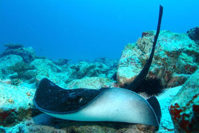 3 scuba diving seychelles tourism board
