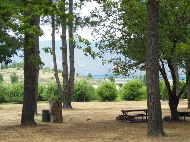 campsite-klondyke pet friendly camping