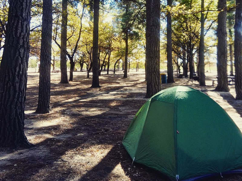 wild-forest-camping
