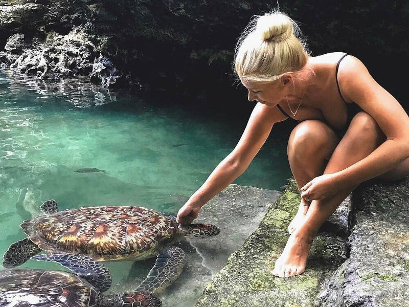 visit-zanzibar-turtles
