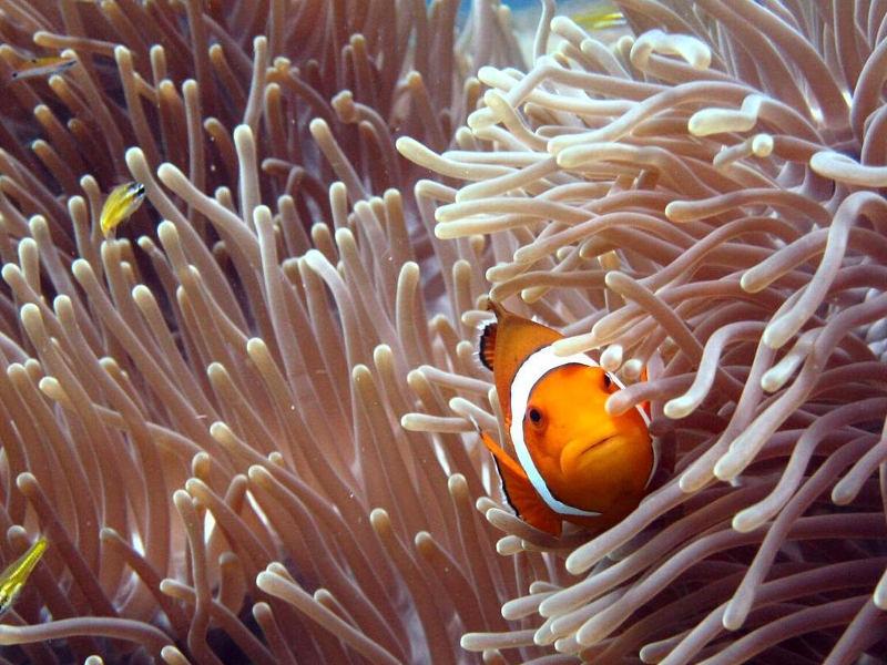 visit-phuket-find-nemo