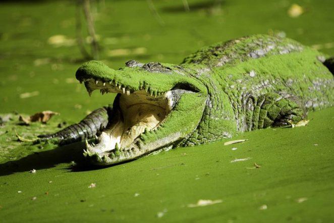 Crocodile Pool, Gambia