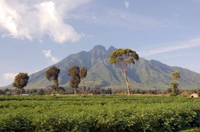 Virunga Mountain Range, Volcanoes National Park