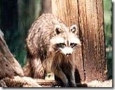 rajiv gandhi wild life sanctuary1