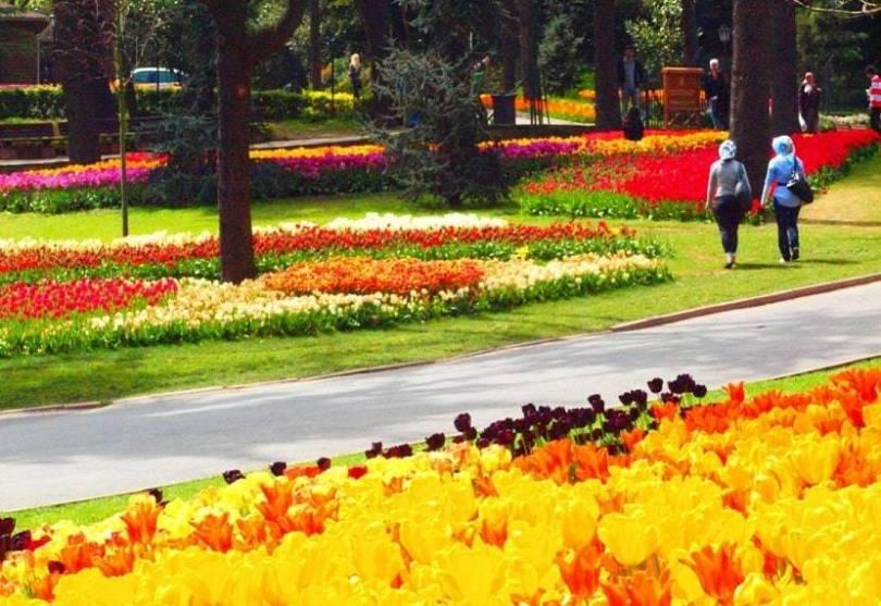 Emirgan Park Istanbul Tulip Festival