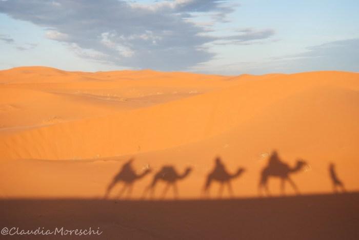 cammellata-nel-deserto
