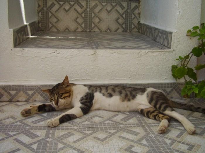 Gatto sull'isola di Nysiros, Grecia