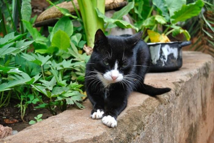 Gatto in Malawi, Africa