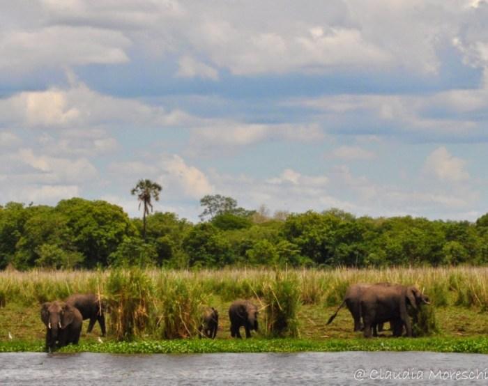 elefanti-malawi