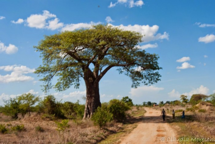 safari-liwonde-park-malawi