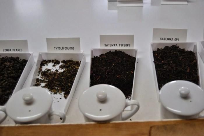 Il tè nero e il tè oolong: i più scuri e ricchi di teina