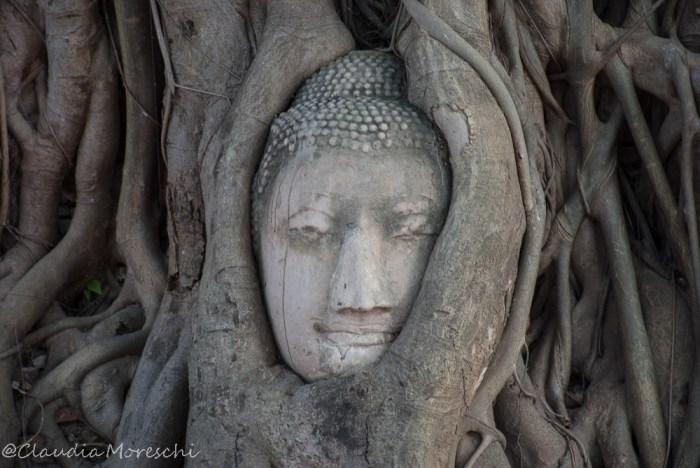 La testa del Buddha nel Wat Mahathat