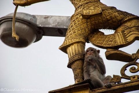 scimmia-lopburi