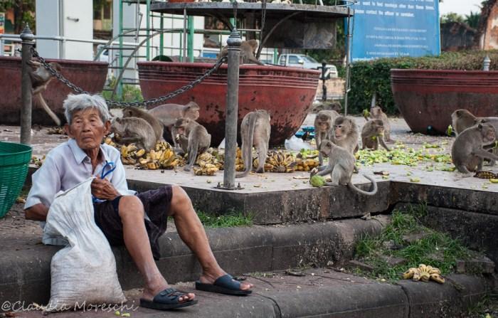 lopburi-città-delle-scimmie