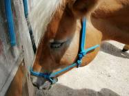 cavallo-centro-equestre-piccole-dolomiti-2