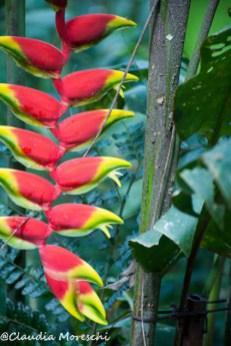 Vegetazione nel Parque das Aves