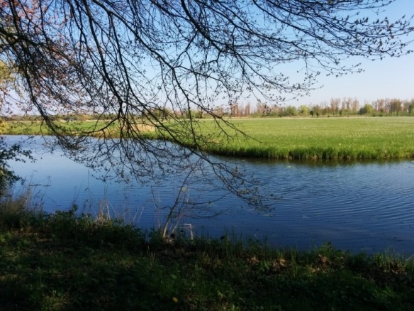 Best day trips from Amsterdam | De Biesbosch