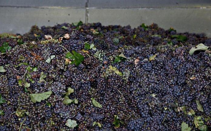 Μεσσηνία κρασί